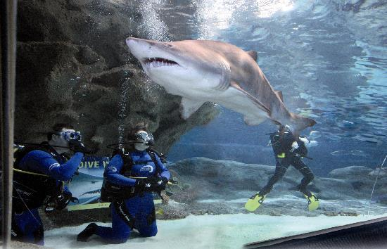 sharks-at-blue-planet